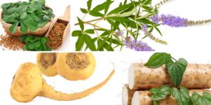 Herbal Progesterone Support